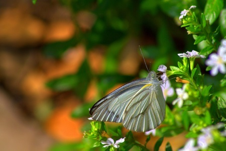 papillon_nature